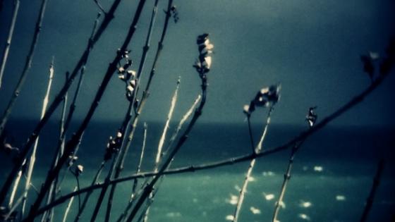 Sample Image Caption