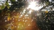 tree-rain